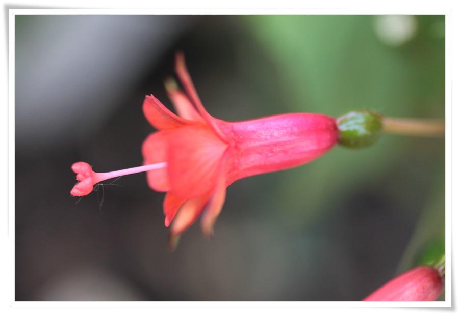 Sommerblumen 2013   22.06.2013 044