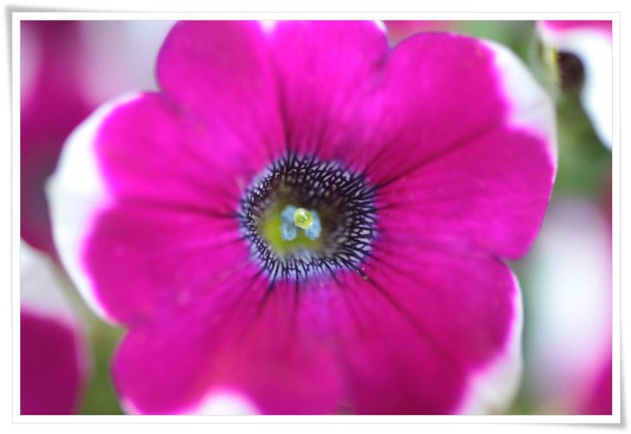 Sommerblumen 2013   22.06.2013 047