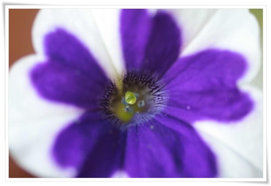 Sommerblumen 2013   22.06.2013 048
