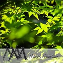 logo_magicmonday500px